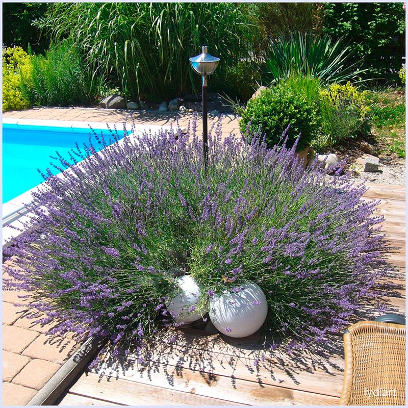Licht und farbe energievolle lebensr ume nat rliche for Gartengestaltung lavendel